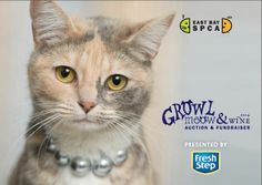 Join us for our annual Growl, Meow and Wine fundraiser Sunday, June 8 from 4-7 pm at our Dublin Adoption and Education & Training Center. http://www.eastbayspca.org/gmw
