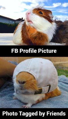 Guinea Pig's profile picture