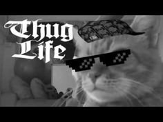 Thug life   Best Thug Life compilation Episode 13   Funny videos 2015