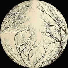 Moon tree Moon Pictures, Art Pictures, Inspiring Pictures, Artistic Tree, Bare Tree, Bird On Branch, Practical Magic, Weird Art, Tree Art