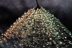 Mesmerising Beauty Of Droplets Captured Through My Macro Lens | Bored Panda