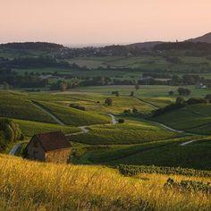 Jolies couleurs sur les vignes du Vernois  | Jura, France | Photo de Stéphane Godin/Jura Tourisme | #JuraTourisme