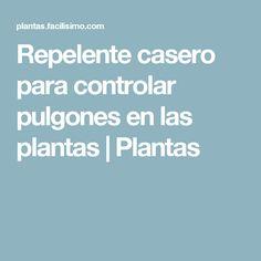 Repelente casero para controlar pulgones en las plantas | Plantas