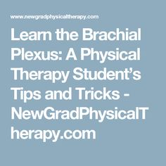 Learn the Brachial Plexus: A Physical Therapy Student's Tips and Tricks - NewGradPhysicalTherapy.com