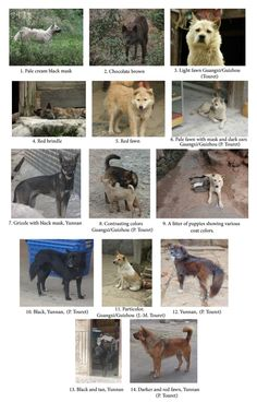 Extensive Phenotypic Diversity among South Chinese Dogs http://www ...