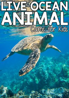 Live Ocean Animal Cams for Kids Right now, animals make up a big portion of our science lessons. We love exploring all different types of animals and learning where they live, what they Science Lessons, Science For Kids, Science Activities, Toddler Activities, Enrichment Activities, Science Worksheets, Earth Science, Educational Activities, Science Experiments