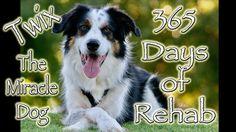 365 Days Of Rehabilitation - Twix's Recovery (Inspirational Video) Dog Clicker Training, Agility Training For Dogs, Dog Training Videos, Training Your Dog, Twin Day, Adolescents, Dog Hacks, Inspirational Videos, Sea World