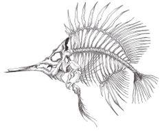 Dessin d'un poisson squelette/ Drawing of a Skeleton fish