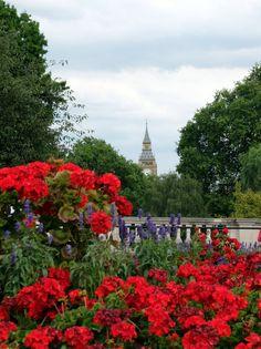 Big Ben vu depuis Saint James Garden (Londres / Angleterre)