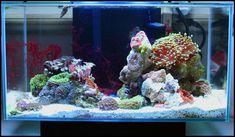 Aquaria #SaltwaterAquariumSetup