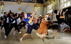 My Dog Henry: Henry Memes pembroke welsh corgi meme thriller michael jackson