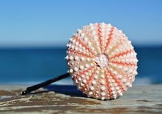 Pink Sea Urchin Hair Pin - Made by TheSandbar https://www.etsy.com/listing/176389320/sea-urchin-hair-accessory-light-pink?ref=shop_home_active_4
