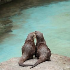 Otterly in love!
