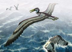pelagornithid - The largest bird that ever flew was the size of a small plane.