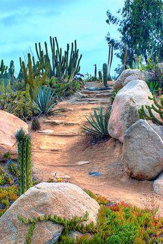 24 Beautiful Desert Garden Design Ideas For Your Backyard Hydrangea Landscaping, Landscaping With Rocks, Front Yard Landscaping, Landscaping Design, Landscaping Software, Modern Landscaping, Desert Plants, Desert Cactus, Dry Garden