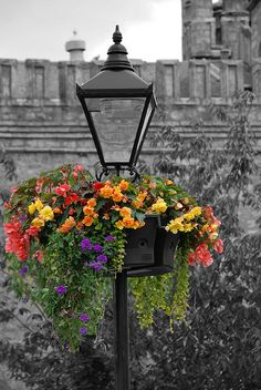 """This could even be accomplished on a front yard lamp post"" Quote Container Plants, Container Gardening, Color Splash, Color Pop, Beautiful Gardens, Beautiful Flowers, Flower Lamp, Street Lamp, Paris Street"