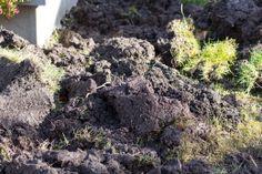 Beet umgegraben