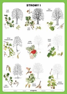 Výsledek obrázku pro lesní stromy World, Art, Science, Education, The World, Kunst, Science Comics, Educational Illustrations, Learning