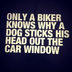 YES! Only a biker knows why a dog sticks his head out the car window.