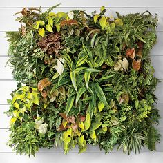 Construct a living vertical wall garden (it's easier than it looks!), and fill it with heat-tolerant plants like begonias, lantana, sweet potato vines, and succulents. Types Of Tomatoes, Types Of Vegetables, Container Plants, Container Gardening, Vertikal Garden, Gutter Garden, Potato Vines, Full Sun Plants, Pot Jardin