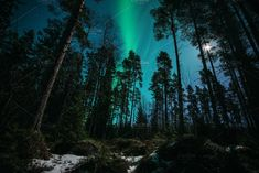 Northern lights in magic forest by skamely on Forest Light, Night Forest, Magic Forest, Moon Child, Stress Relief, Fountain, Northern Lights, Around The Worlds, Landscape