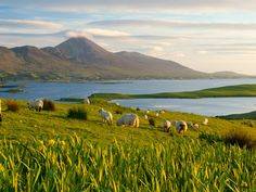 Take a Luxury Train Ride Through Ireland | Liz Sheldon writes why Belmond's Grand Hibernian Train is the ultimate luxury for travel in Ireland. Read more at Food & Wine.