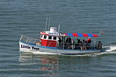 Little Toot - Clearwater Beach - bring your camera! Dolphin Tours, Clearwater Florida, Tug Boats, Gulf Of Mexico, Boat Tours, Tampa Bay, Dolphins, Great Places, Toot