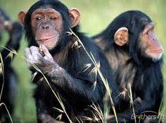 cool monkey :D