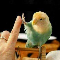 Toca aqui! #parrotmemes