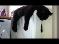Cat hugging radiator.