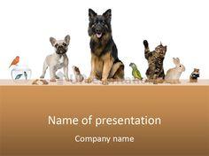 Pet dart guinea pig PowerPoint Template