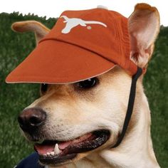My friend's dog looks like this one & is also a huge Longhorns fan.