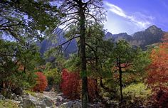 "photo by Richard Reynolds"" Guadalupe Mountains National Park, Mount Rainier, Devil, National Parks, Autumn, Travel, Texas, Voyage, Texas Travel"