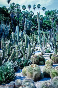 Mossen Costa i Llobera garden in #Barcelona @emorata > Gorgeous photos on this site