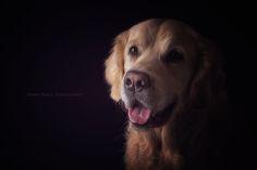 golden portrait by Danny Block on 500px