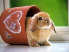 cute bunnies in cups - Google Search