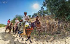 jg-photo.gr Camel, Horses, Landscape, Animals, Scenery, Animales, Animaux, Camels, Animal