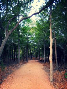 3. Palmetto State Park San Marcos River Trail, 1.25 miles (Luling)