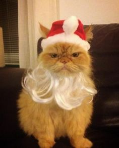 & Cats (234 Pictures) | Pinterest | Santa Cat and Animal
