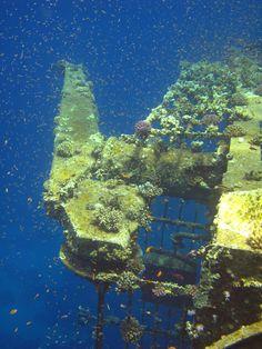 Auch die kleinen Unterwasserbewohner finden hier eine Unterkunft