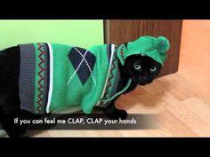 N2 the Talking Cat - Preppy Cat (Official Music Video) - http://www.gigglefinger.com/n2-the-talking-cat-preppy-cat-official-music-video/