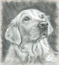 Golden retriever portrait Golden Retriever Art, Golden Retrievers, Animal Drawings, Art Drawings, Amazing Drawings, Dog Paintings, Dog Tattoos, Wildlife Art, Dog Portraits