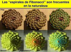 Espiral de Fibonacci en la naturaleza