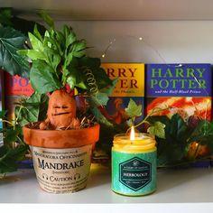 Worthington Ave: DIY Mini Potted Mandrake