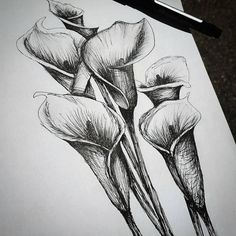 Calla Lilly Flower - Pen Drawing, Artist, Art, Michigan, Sketch, Graphite, Charcoal