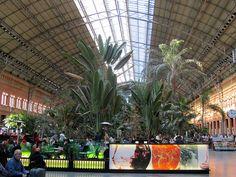 Il giardino tropicale di Atocha nella stazione di Madrid | #Madrid #TRAVELSTALES
