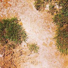 #SalentowebTv #weareinsalento Una landa di sale si estende davanti ai nostri occhi mentre proseguiamo lungo il percorso della nostra visita guidata qui alla Palude del Capitano. Dove l'acqua asciugata dal sole del #Salento lascia un velo di sale sulla nuda terra. Guarda il video http://www.salentoweb.tv/video/9569/scoperta-palude-capitano