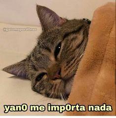 Cute Cat Memes, Cute Love Memes, Stupid Funny Memes, I Love You Baby, Spanish Memes, Meme Template, Cartoon Memes, Meme Faces, Reaction Pictures