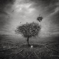 Traitement, Numérique dans Nature, Animal, Oiseau - Image #577819