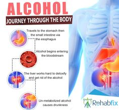 What Happens Inside Your Body When you Drink #Alcohol